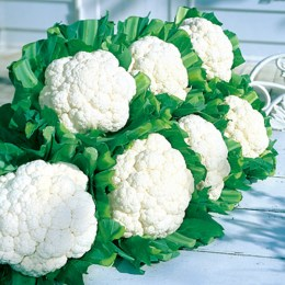 coliflor_snow_crown